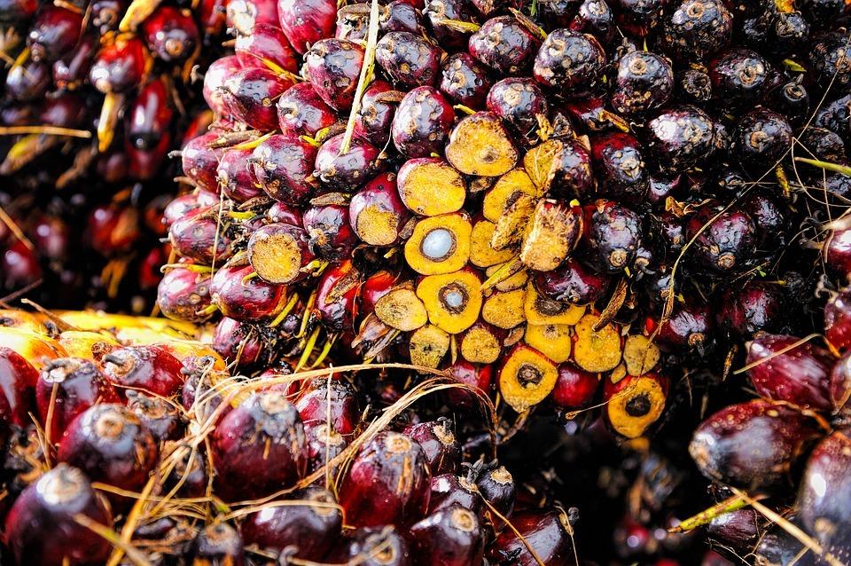 Развеяли главный миф о пальмовом масле