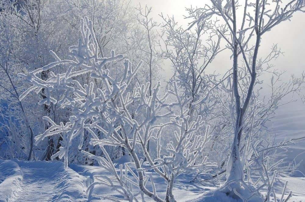 В Рязанской области похолодает до минус 35 градусов и ниже